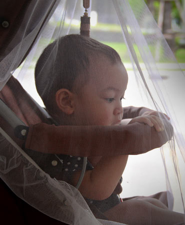 photograph of a baby under a malaria net in a stroller